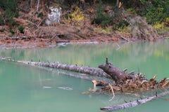 Besnoeiingsboom die zich in het meer in Rugova, Kosovo bevinden Royalty-vrije Stock Fotografie