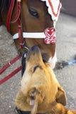 Beso de caballos y de perros fotografía de archivo