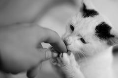 Beso de los gatos Imagen de archivo libre de regalías