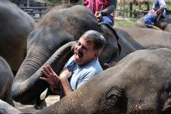 Beso del elefante Imagen de archivo libre de regalías