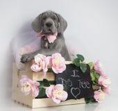 Besorgt für die Hochzeit stockfotos