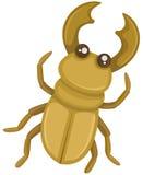 Besouro Imagens de Stock