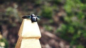 Besouro da cor incomum no parque asiático video estoque