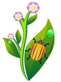 Besouro de Colorado na batata da folha ilustração stock