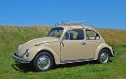 Besouro de Volkswagen fotografia de stock
