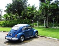 Besouro em Brasil Imagens de Stock Royalty Free