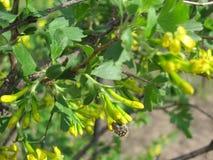 Besouro em uma flor Fotografia de Stock Royalty Free
