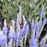 Besouro nas cores, guarda de sono, natureza bonita, habitante interessante, hora de descansar, verão fotografia de stock royalty free