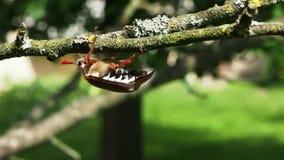 Besouro que rasteja nas plantas video estoque