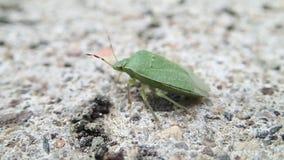 Besouro verde do protetor no cimento vídeos de arquivo
