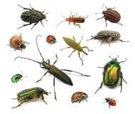Besouros Fotos de Stock