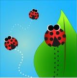 besouros Fotografia de Stock