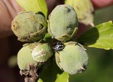 Besouros coloridos Imagem de Stock