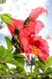 Besouros em uma flor vermelha imagens de stock royalty free