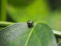 Besouros exóticos coloridos Imagem de Stock