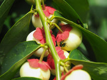 Besouros exóticos coloridos Imagens de Stock Royalty Free