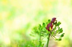 Besouros na natureza Foto de Stock
