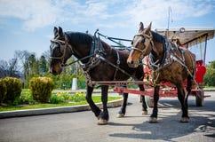 Bespannter Weinlesewagen transportiert Gäste zum großartigen Hotel Stockfoto
