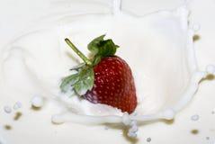 Bespattende aardbei in een melk Royalty-vrije Stock Fotografie