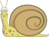 Bespectacled snail, vector illustration Stock Images