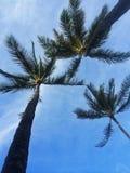 Besprekings mooie palmen - bekijk omhoog de blauwe hemel Royalty-vrije Stock Foto