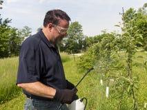 Bespruta en Apple Treel med en organisk sprej Arkivbilder