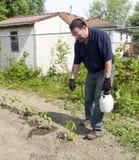 Bespruta pepparväxter med en organisk sprej Fotografering för Bildbyråer