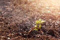 Bespruta vatten på den lilla växten på den svarta jorden i trädgården arkivfoto
