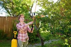 Besprutar den caucasian kvinnan för den mellersta åldern träd mot plågor, ohyra eller sjukdomväxter fotografering för bildbyråer