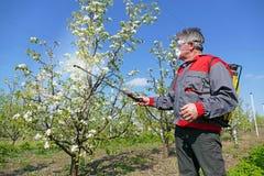 Bespuitend pesticide royalty-vrije stock afbeeldingen