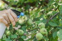 Bespuitende appelbomen van ongedierte stock afbeeldingen