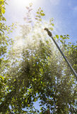 Bespuitende bomen tegen ongedierte stock foto