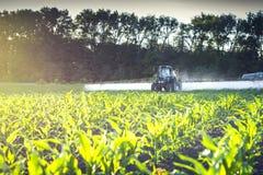 bespuitende micro- meststoffen op het jonge graangebied stock afbeelding
