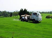 Bespuitende pesticiden Royalty-vrije Stock Foto