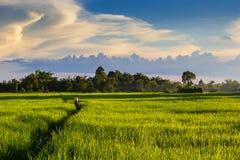 Bespuitende pesticiden Royalty-vrije Stock Foto's