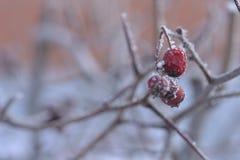 Bessen en andere installaties onder de sneeuw stock fotografie