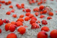 Bessen in het zand Royalty-vrije Stock Foto