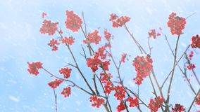 bessen op boomtakken bij dalende sneeuw stock footage