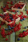 Bessen Rode aalbes en bosbessen Stock Afbeelding