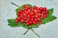 Bessen van rode aalbes op groene bladeren Stock Afbeeldingen