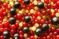 Bessen van zwart rood en witte aalbes Royalty-vrije Stock Fotografie