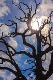 Beständiger Todesbaum mit bulesky Hintergrund Stockbilder