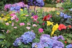 Beständiges Gartenblumenbeet im Frühjahr lizenzfreies stockbild