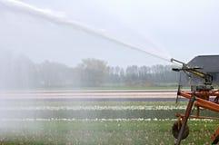 Bestänkande av den holländska torkan för hyacintfält tack vare arkivfoton