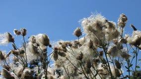 Bestäubung durch Wind Lizenzfreie Stockfotos