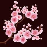 Beståndsdel för filial för vektorsakura blomma Elegant beståndsdel för din design Körsbärsröd blomning Royaltyfri Bild