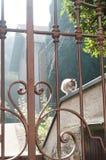 Beståndsdelar av den dekorativa blom- prydnaden i falskt staket och katt i bokehen på bakgrund comoitaly lake Royaltyfria Foton