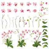 Beståndsdelar för tropiska blommor för orkidé blom- i vattenfärgstil Arkivfoto
