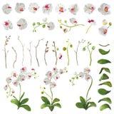 Beståndsdelar för tropiska blommor för orkidé blom- i vattenfärgstil royaltyfri illustrationer