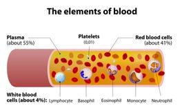 Beståndsdelarna av blod blodkärlsnittavsnitt Royaltyfri Foto